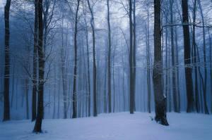 Winter by Rizone