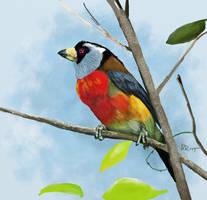 7 color bird
