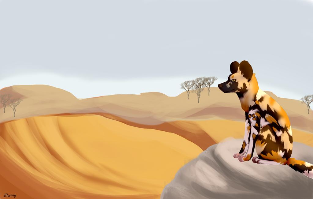 Desert king by Hoplights