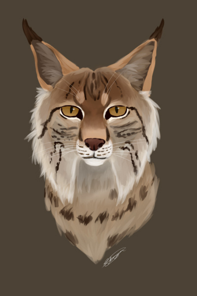 Lynx by Hoplights
