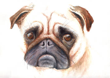 A pug for Lauren by mynti