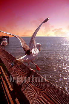 seagull sunset2