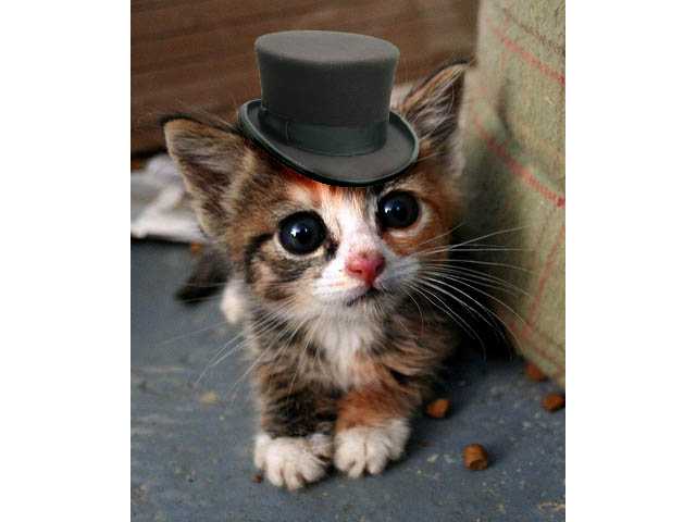kitten_in_a_tophat_by_peaches87564.jpg