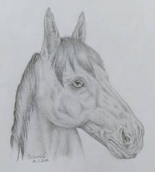 Horse (Horse-Donkey)  by Qeviry