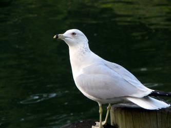 . kakii.com stock bird by kakiii