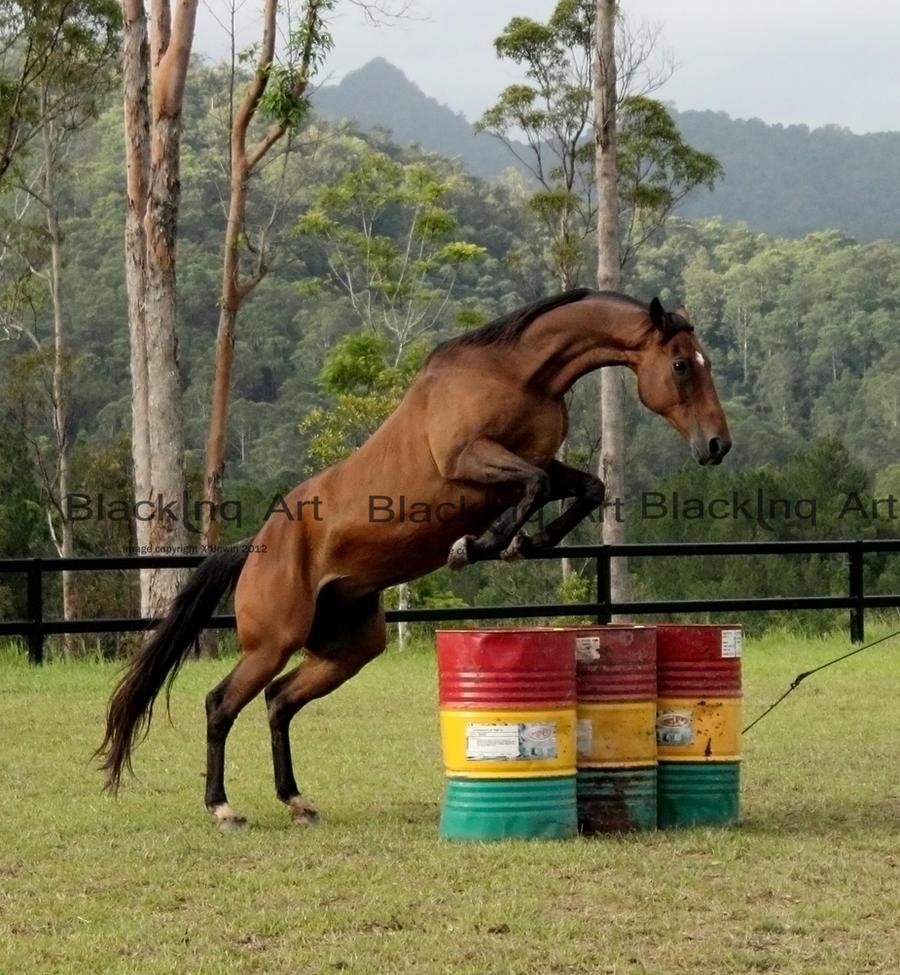 horse jumpimg