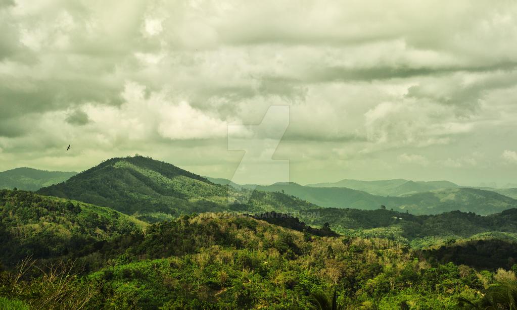 Rain forest by dejz0r