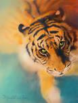 Colourful tiger