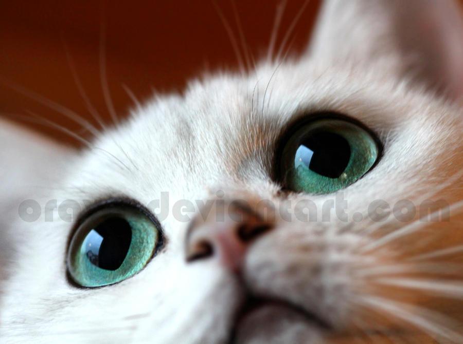 Big Green Eyes by Orava