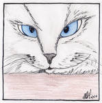 Cat by avelira
