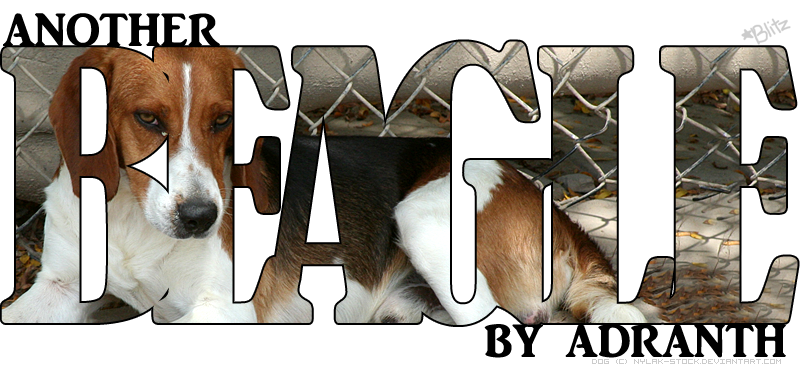 Adranth's BEAGLES by magsislove