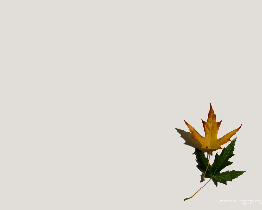 Two Autumn Leaves... by josmith