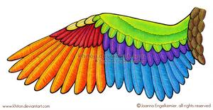 Bird Wing Diagram by khiton