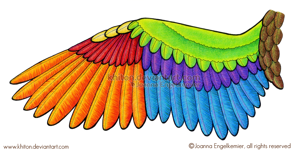 Bird Wing Diagram By Khiton On Deviantart