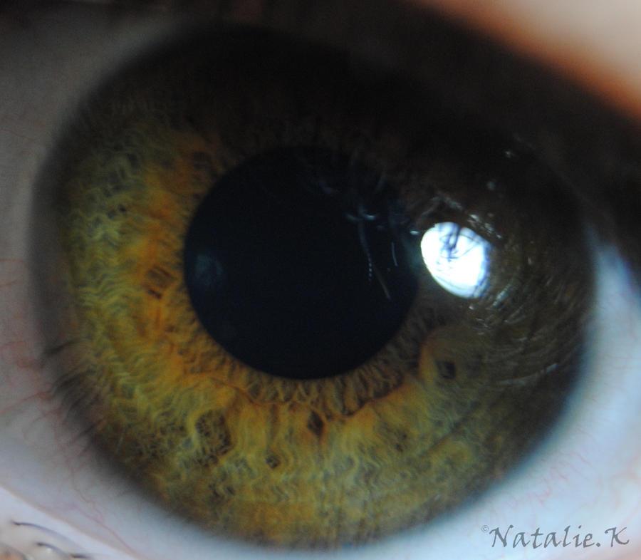 corine's iris 1 by AngelicPicture