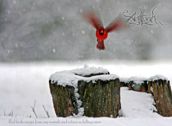 Agalloch: Falling Snow