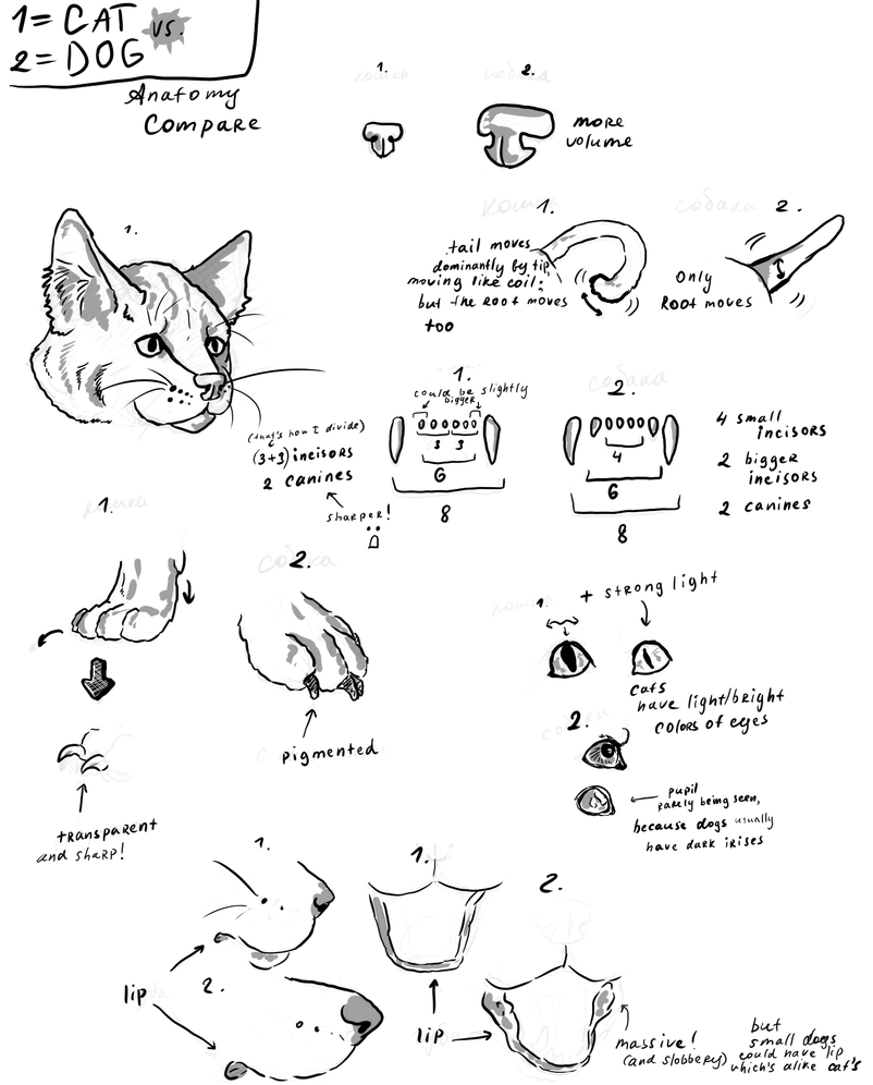 Cat vs. Dog: Anatomy Compare by clotus on DeviantArt