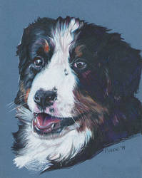Bernese Mountain dog by clotus