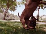 dachshund flight.