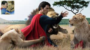 Superman vs Lions