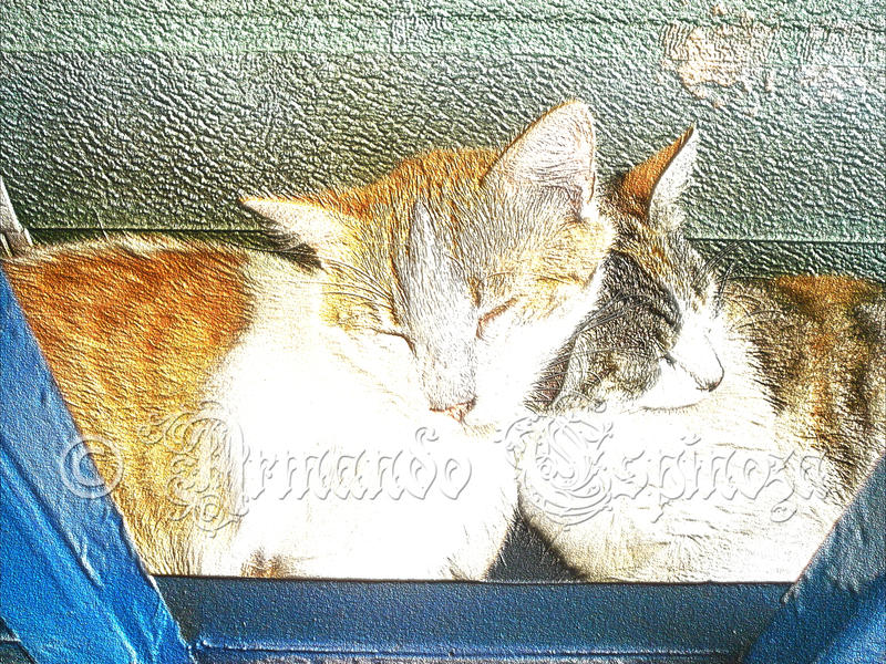 Cats 4 by MuDDiTToX