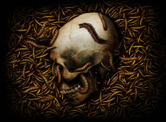 Skull (insects)