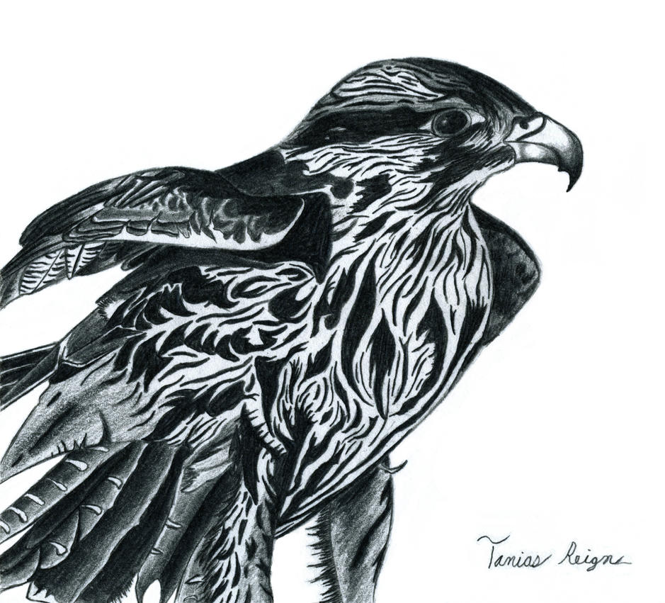 Hawk by Tanias-Reign