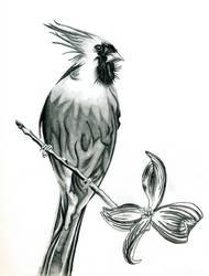 Cardinal by Tanias-Reign