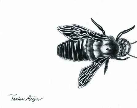 Bee by Tanias-Reign