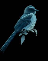 Bluebird by Tanias-Reign