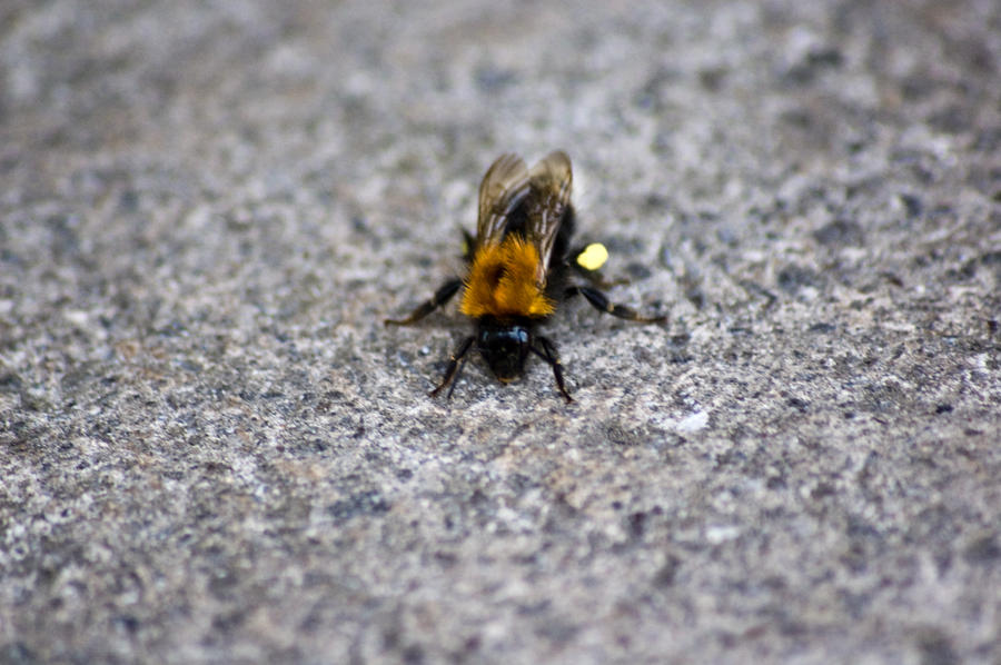 from August the bee speed dating
