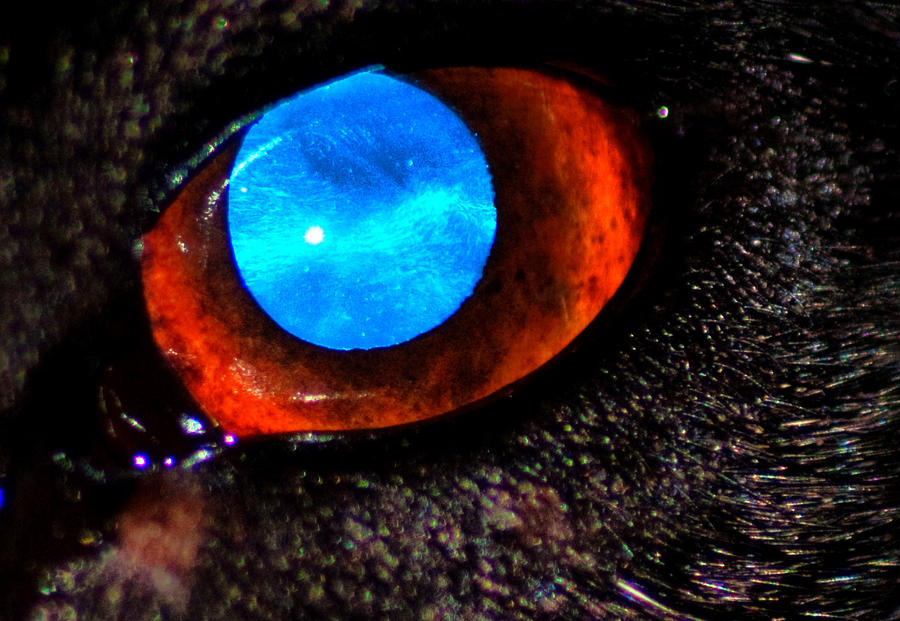 this is my staffys eye macro by speed-demon