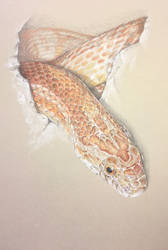 Corn Snake by AngelaMende