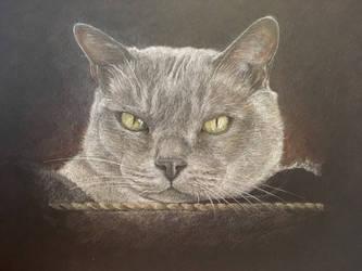 Burmese Cat by AngelaMende