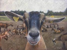 La Chieuvre (The Goat)