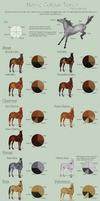 Horse Colour Tones Guide