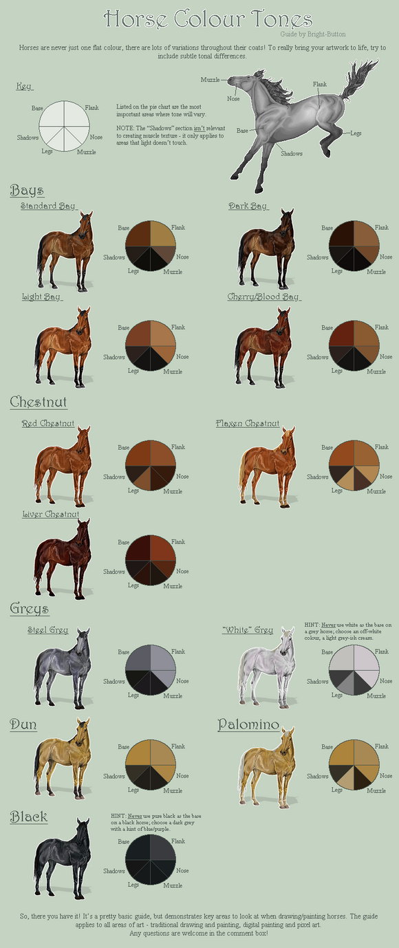 Horse Colour Tones Guide by Bright-Button