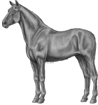 FREE - standing horse greyscale
