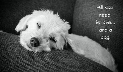 My dog by LabrosseN