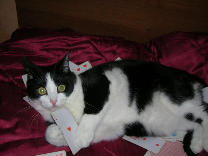 Kittys Heart by Agregor