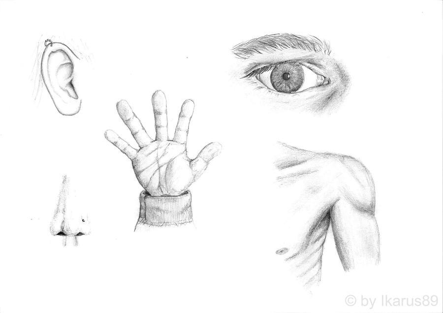 Body Parts U0026#39;sketchu0026#39; By Ikarus89 On DeviantArt