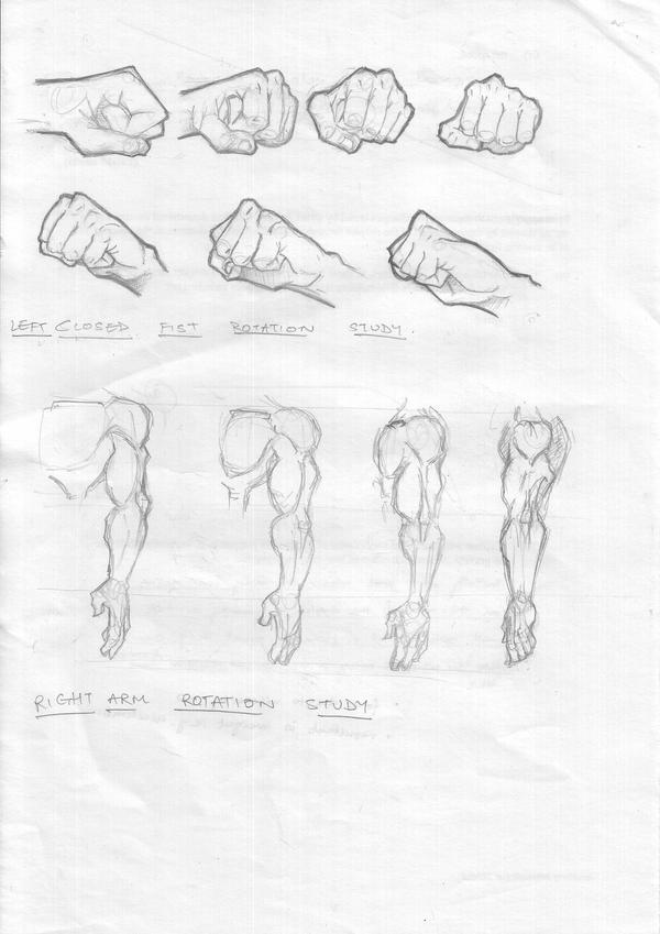 Fist Study by FATRATKING