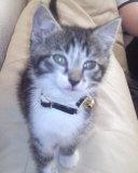 merlin my cute kitten by sarcasticAquarium
