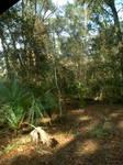 wechiwa springs FL 2
