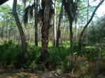 wechiwa springs FL 3