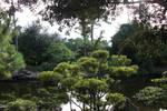 the gardens of Morikami