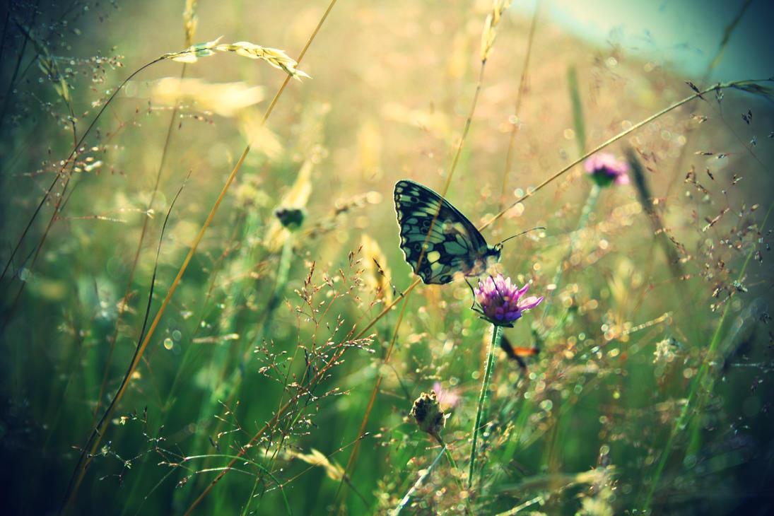 Pollen by KenyT