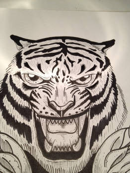 TIGER ( SPEED DRAWING VIDEO link included)