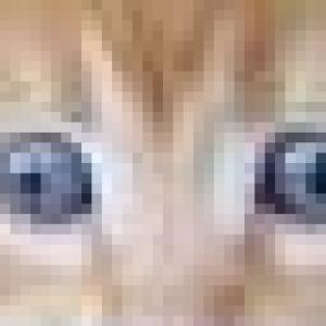 maxcat192's Profile Picture