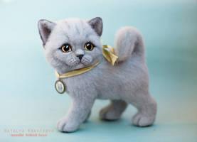SOLD - British kitten Martha